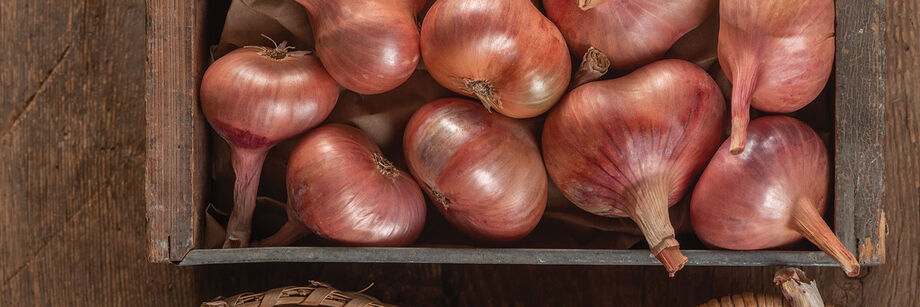Several red-brown shallots, grown from Johnny's shallot seeds.