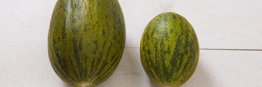 Two Piel de Sapo melons show the mottled green skin of this type of melon.