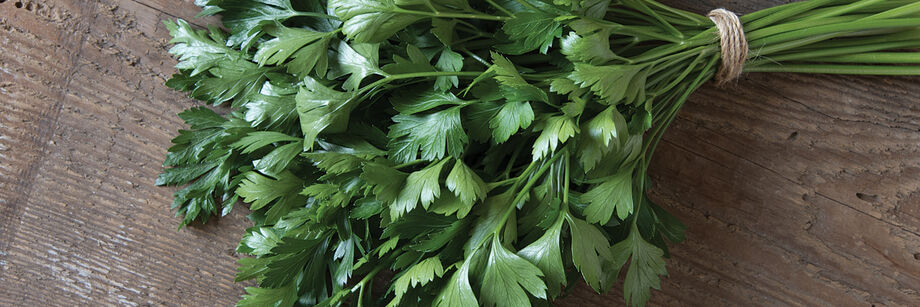 A large bunch of leaf parsley.