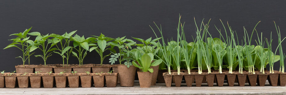 Several biodegradable Fertil Pots with plants growing in them: cell packs and square and round pots of varying sizes.