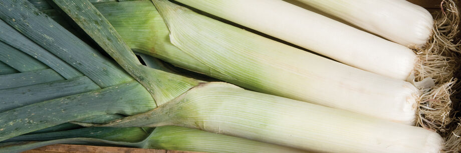 Close-up of several leek shanks, grown from leek seeds and plants offered by Johnny's.