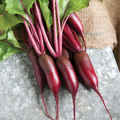 Cylindra Cylindrical Beets