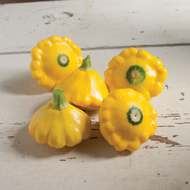 Sunburst Summer Squash
