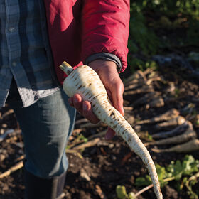 White Spear Parsnips