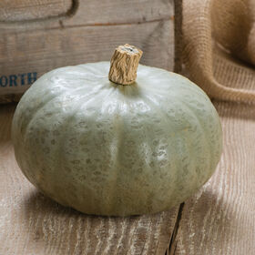 Winter Sweet Winter Squash