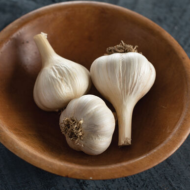 German Extra Hardy Garlic