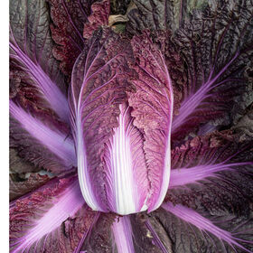 Merlot Chinese Cabbage