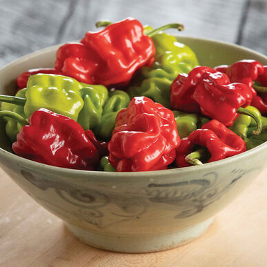 Dragon's Toe Hot Peppers