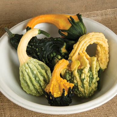 Autumn Wings Blend Gourds