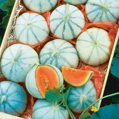 Savor French Melons (Charentais)