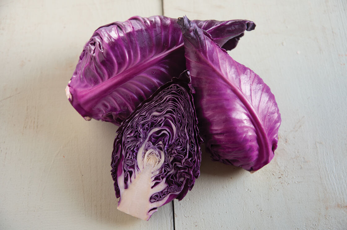 Candy Red Cabbage Seed Johnny S Selected Seeds