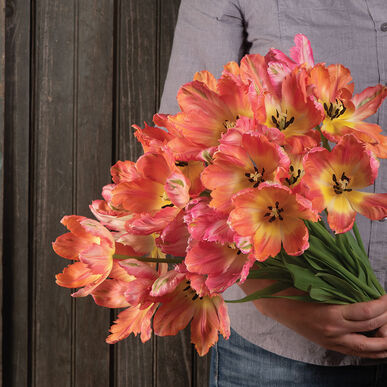Apricot Parrot Tulips