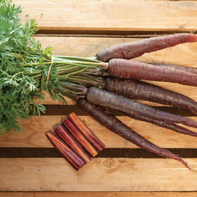 Purple Sun Colored Carrots