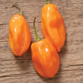 Habanero Hot Peppers