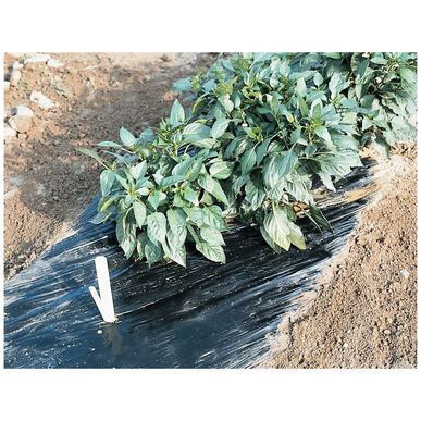 Smooth Black Mulch – 4' x 100' Solid Plastic (Polyethylene) Mulch