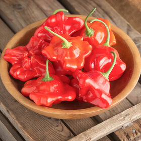 Mad Hatter Hot Peppers