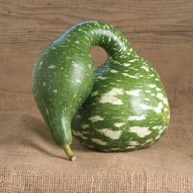 Speckled Swan Gourds