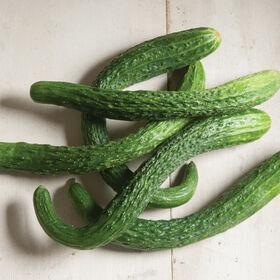 Suyo Long Specialty Cucumbers