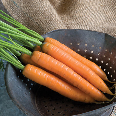 Yaya Early Carrots