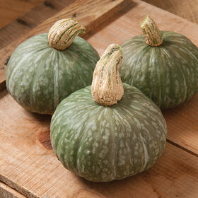 Shokichi Green Winter Squash