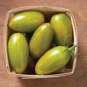 Green Tiger Specialty Tomatoes