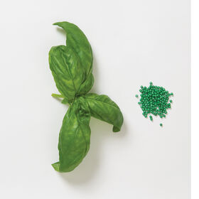 Genovese Compact, Improved Multi-Seed Pellet Compact Genovese Basil