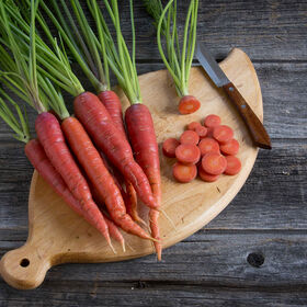 Malbec Colored Carrots
