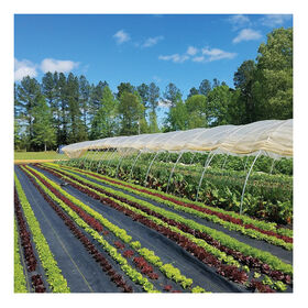 Sunbelt Black Ground Cover – 4' x 100' Fabric Mulch