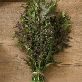 Red Splendor Mustard Greens