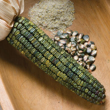 Oaxacan Green Dry Corn