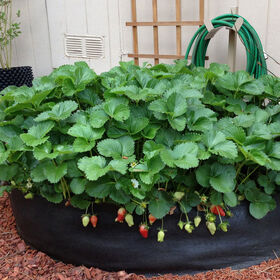 Big Bag Bed – Original Raised Beds & Planters