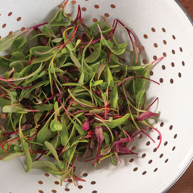 Chard and Beet, Rainbow Sprinkles Mix Microgreen Mixes