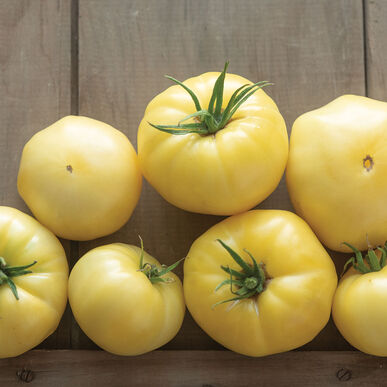 Marvori Specialty Tomatoes