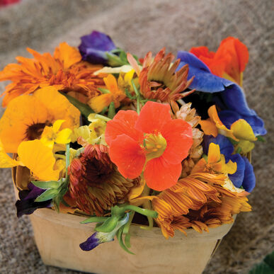 Edible Flower Collection Flower Collections and Mixes