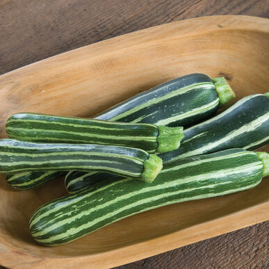 Safari Summer Squash