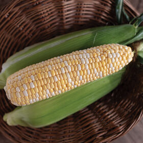 Natural Sweet Sweet Corn