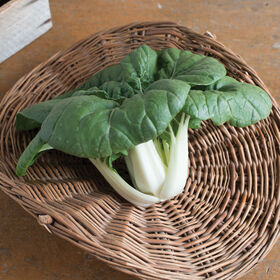 Asian Delight Pac Choi (Bok Choy)