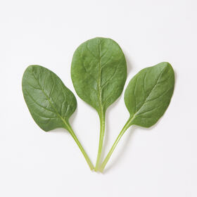 Space Smooth-Leaf Spinach