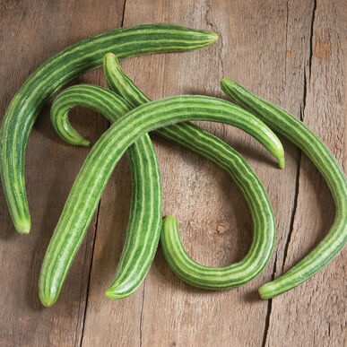Striped Armenian Specialty Cucumbers