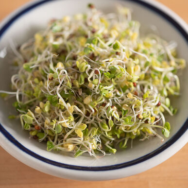 Broccoli Organic Sprout Seed