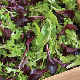 Five Star Greenhouse Lettuce Mix Lettuce Mixes