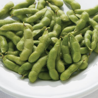 Varieties of Edamame Available from Wannamaker Seeds, Inc.