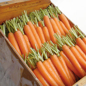 Napoli Early Carrots