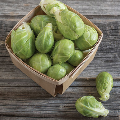 Dagan (F1) Brussels Sprout Seed