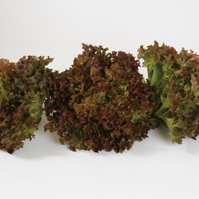 Salanova® Red Incised Salanova® Lettuce