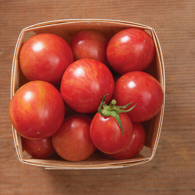 Pink Bumble Bee Specialty Tomatoes