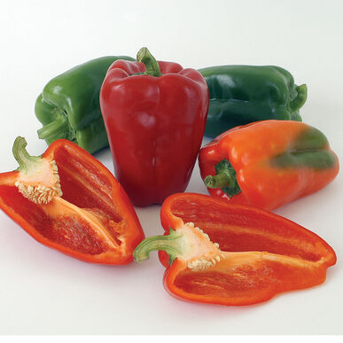 Ace Sweet Bell Peppers