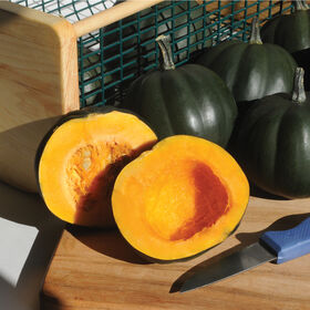 Honey Bear Winter Squash