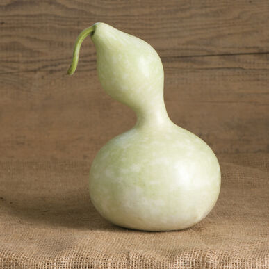 Bottle or Birdhouse Gourds