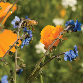 Bee Feed Mix Wildflower Mixes